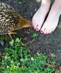 Nancie's toes delight in farm visit